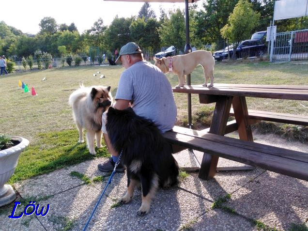 17.7.2019 - Howard, Dwix und Gina beim Rally Obedience